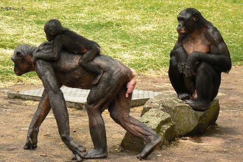 Bonobo #3