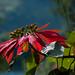Guatemala & Belize-4007 © Bart Plessers