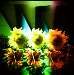 three sunflowers-psychedelic