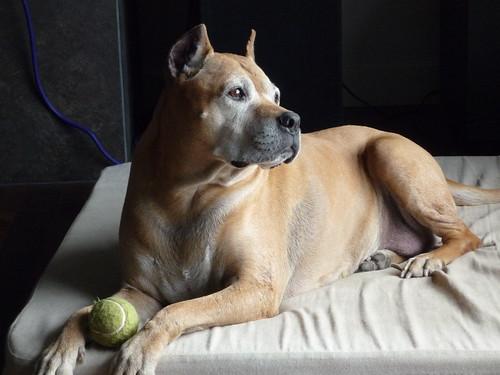 Luba's dog Lace