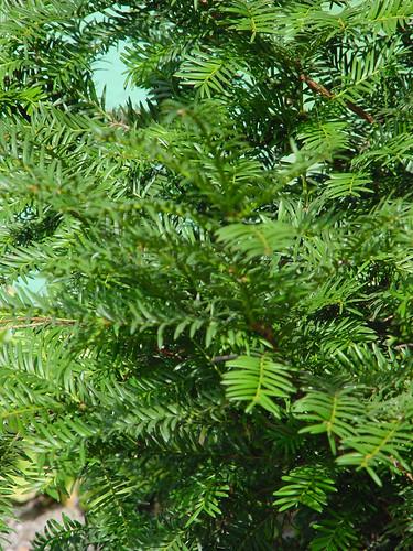 Tree 20 of 22