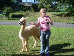 Alpaca and his girl