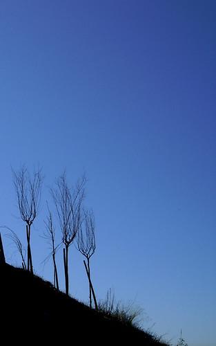 Fork trees