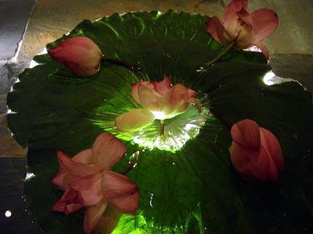 wild lotus pond
