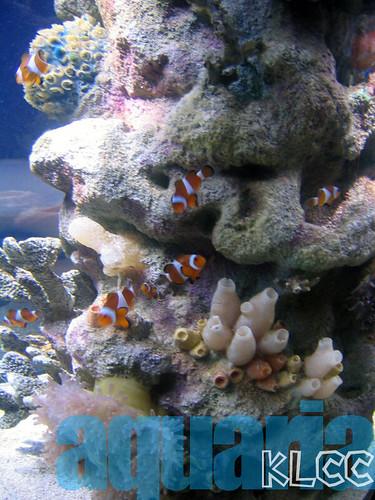 aquaria7