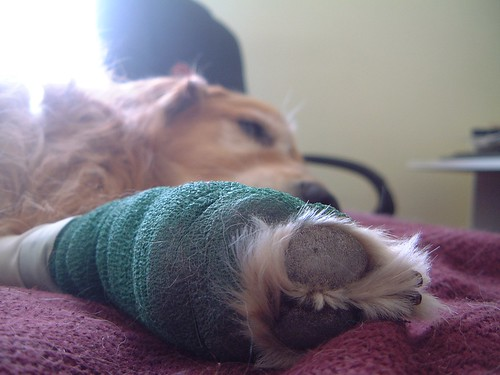 Dexter with bandage