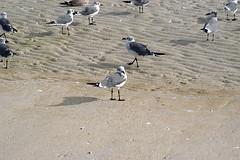 seagull_shadow.jpg