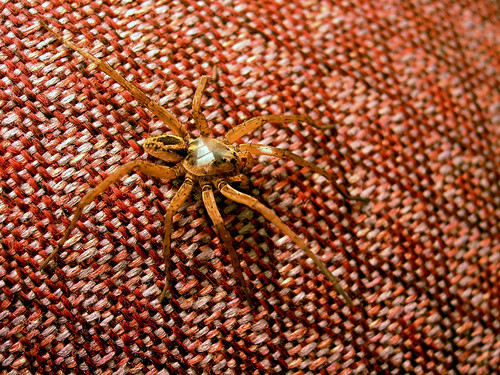Adidas Spider