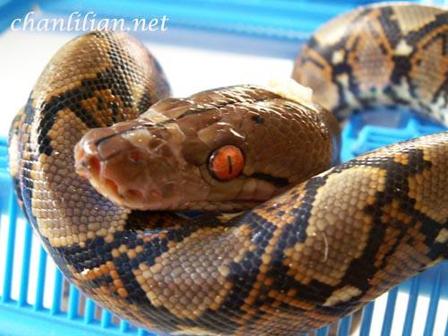 snake5