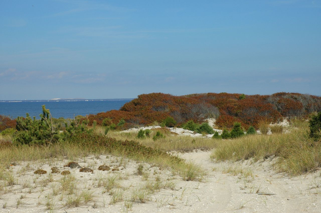 sand dunes and Great South Bay
