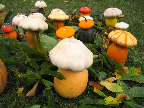 cucubirtacees ou champignons