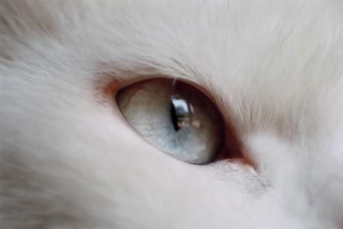 Ojo de Lala