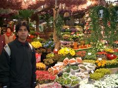 Kat Florist Market, Amsterdam, Netherlands