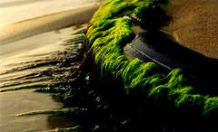 Sea tire