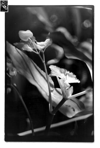 Flower at MO Botanical Garden