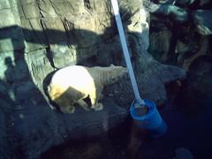 Cpk zoo