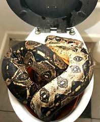 snake in a pooper