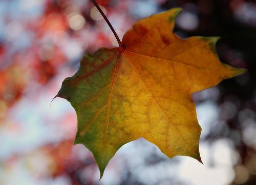 Technicolor Leaf