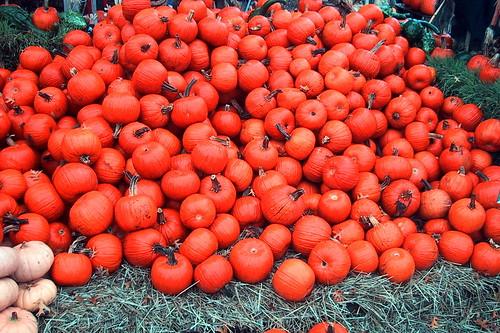 Mini Pumpkins at the Farm
