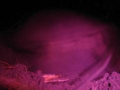Turtle Burying her Eggs