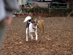 tiki and sadie, running i