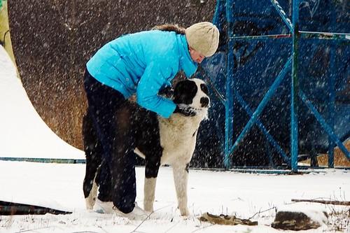 Пёс, с девчонкой