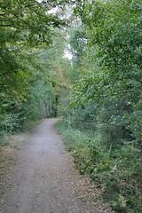 Un bosque de Rascafría