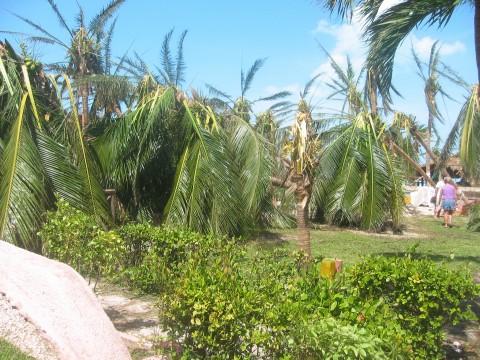Isla Palms