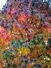 Herbst bunt