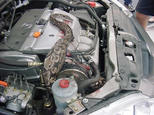 snake engine