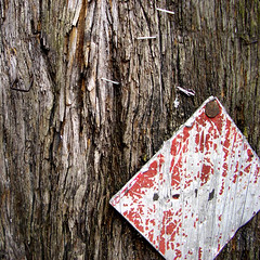 wood, close-up
