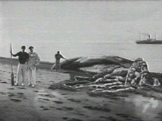Pulpo (globster) gigante varado en la playa