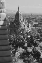 Myanmar Top Top Top (158)