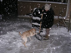 Rocky and the snow shovel 2