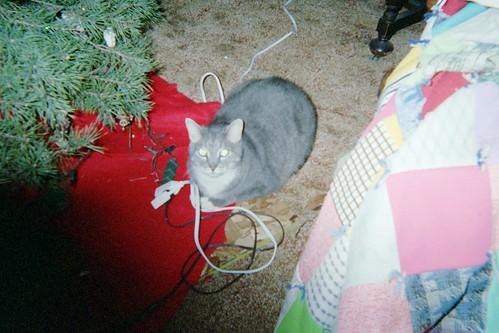 Christmas Phogg