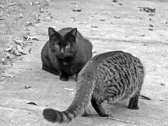 Cat 060119 #02