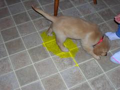 puppypee