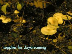mushroomsupplies