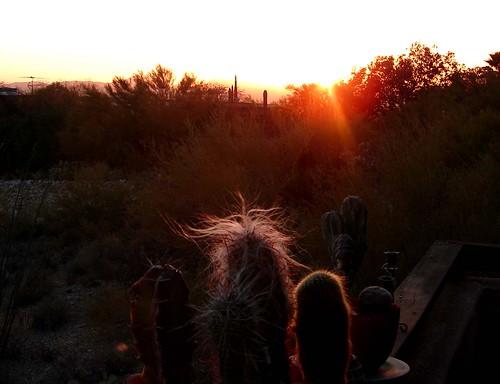 Feb 06 Tucson 040