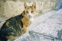 Ook oude katten mogen genieten van hun rust