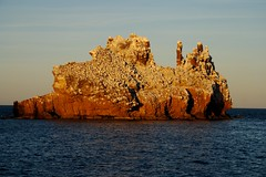 Bird Poo Island At Sunset