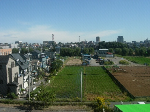 On a way to Tokyo: view from Saikyou train