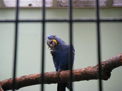 荷兰之行(11)----阿姆斯特丹动物园