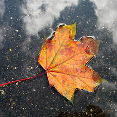 Autumn Art in a Puddle photo by Batikart