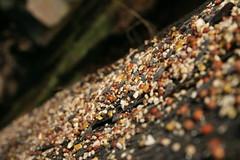 Seed, Seed, Everywhere a Seed