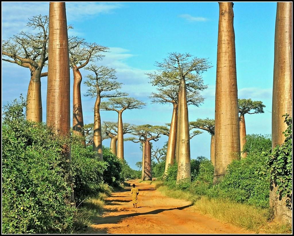 Women at Baobab Avenue photo by Zé Eduardo...