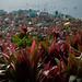Guatemala & Belize-4223 © Bart Plessers