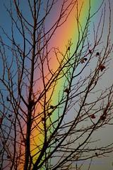Color - Rainbow Through the Sycamore photo by Darvin Atkeson