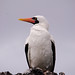 Ecuador and Galapagos-2151 © Bart Plessers