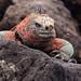 Ecuador and Galapagos-2095 © Bart Plessers